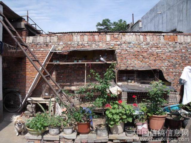 农村简陋房子图片