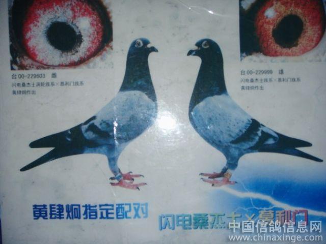09江西吉安春季双关赛总冠军普赛亚军之外祖父母