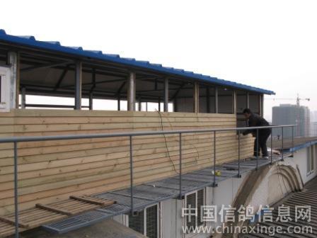 改建赛鸽棚--中国信鸽信息网相册图片