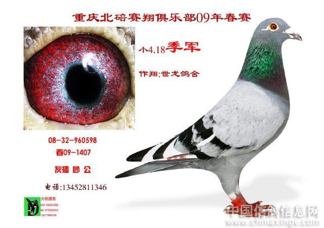 请欣赏重庆北培区鸽会
