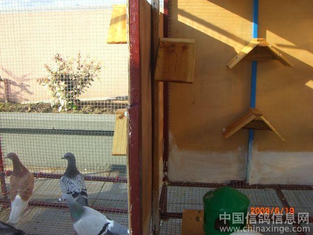 小鸽舍设计图信鸽鸽舍设计图高层阳台鸽舍设计图