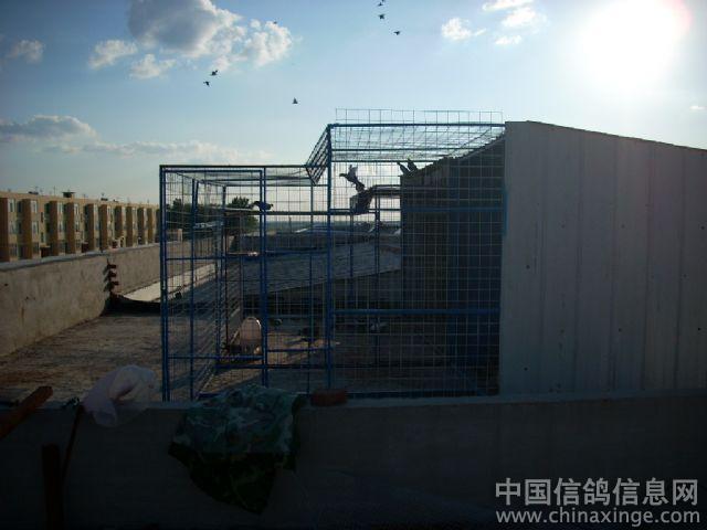 台湾鸽棚设计图_农村鸽子棚搭建图片-农村简单鸽子棚图片 鸽子棚怎么搭建图片 ...