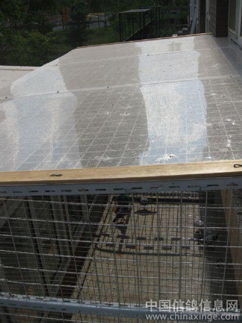 中国 鸽舍/太阳罩顶部安装阳光板、透光避雨作用。另由于是一楼防止高空...