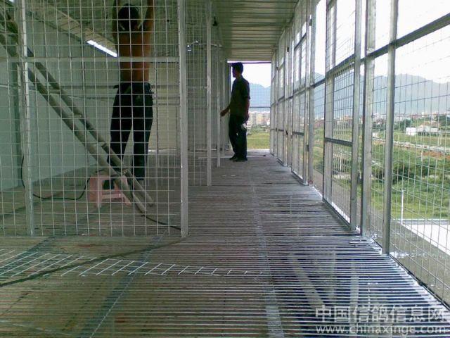 你们说可以吧,鸽棚有10几米长! 喜欢ZhuaJi或者有比赛鸽子的可以图片