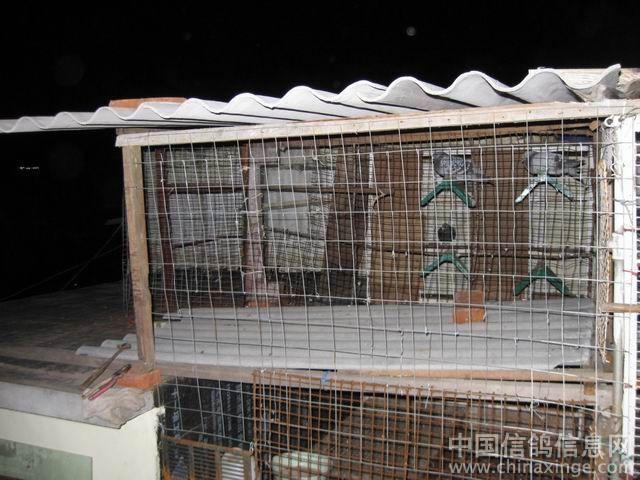 中国 朱波/鸽舍建造//中国信鸽信息网相册