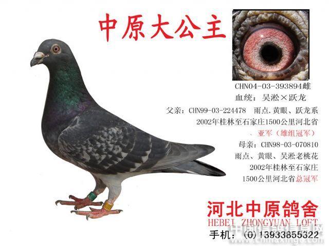 河北中原鸽舍—冠军家族--中国信鸽信息网相册