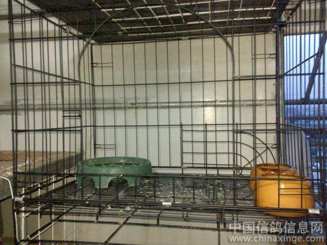 鸽子棚吊笼设计图; 等待奇迹鸽棚一年后;
