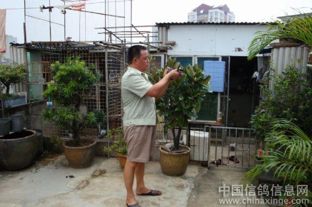 农村简陋鸽棚图片 不花钱做鸽棚图片 小型鸽棚 阳台鸽棚图片