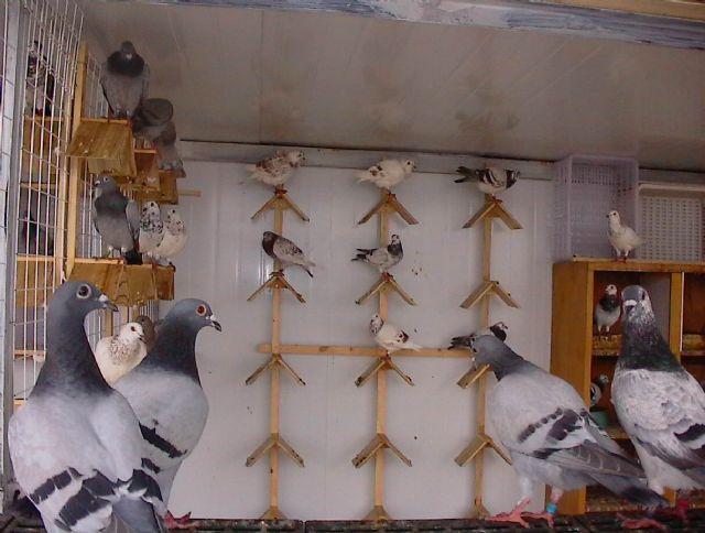 废物利用制作丹顶鹤
