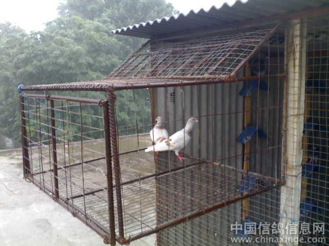 农村信鸽鸽舍设计图展示