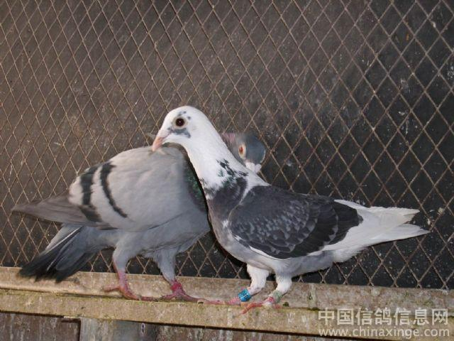 鸟类鸽蜜蜂鸟动物640_480人被鸽子蜇了怎么办图片
