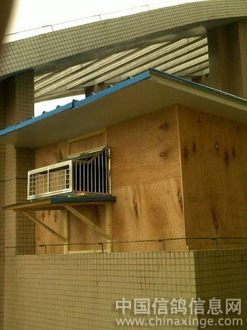 鸽舍建造; 鸽笼跳门图片 自制鸽笼图片大全自制鸽笼跳门图美女私房照