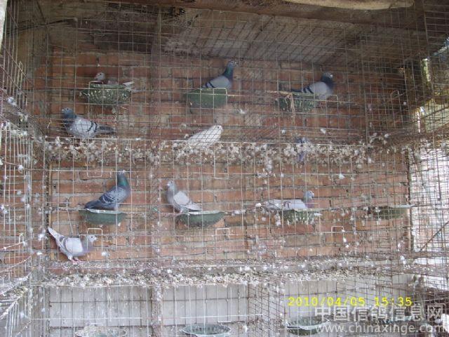 农村鸽子窝设计图片
