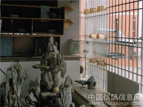 中国 信鸽/新阳台鸽舍 中国信鸽信息网相册...