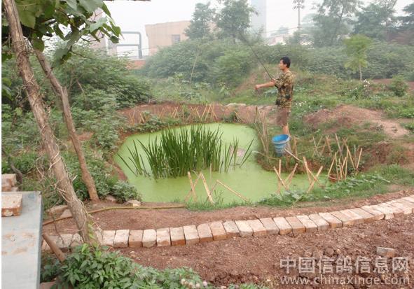 庭院小鱼池设计效果图