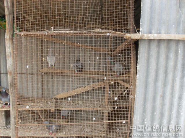 简单鸽子笼木制设计图