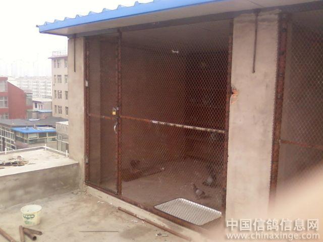中国 鸽舍/鸽舍建造//中国信鸽信息网相册...