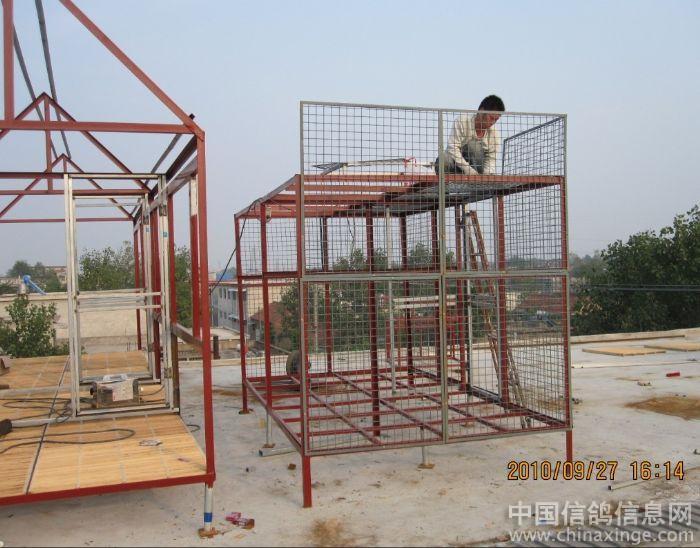 鸽舍--中国视频信息网信鸽在线观看鲁相册快图片
