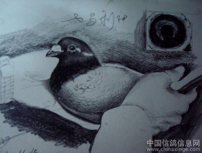 画画素描图片大全鸽子