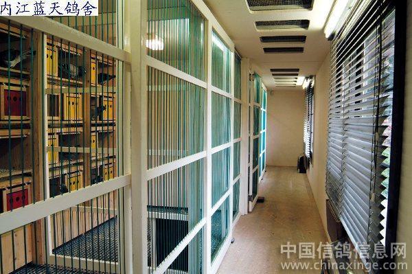 以下照片均为比利时实地拍摄; 米歇尔先生的鸽舍--中国信鸽信息网相册