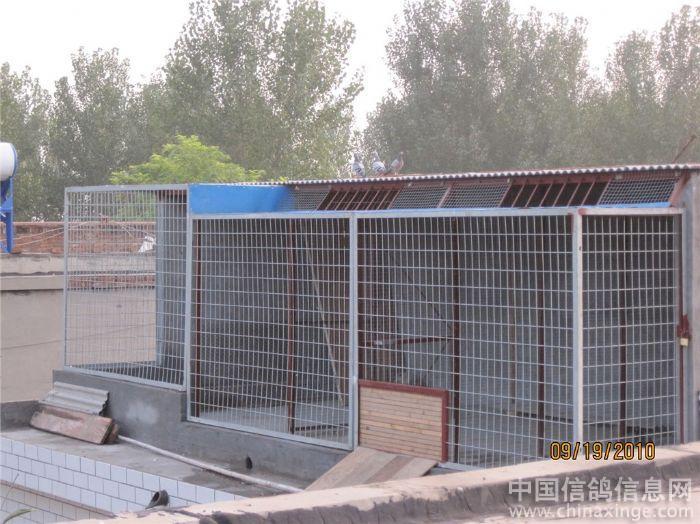 视频鸽舍--中国信鸽信息网相册阳光高清泰山板图片