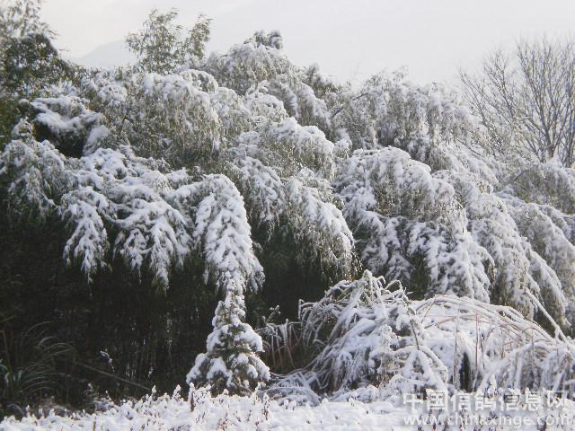 南方小镇雪景