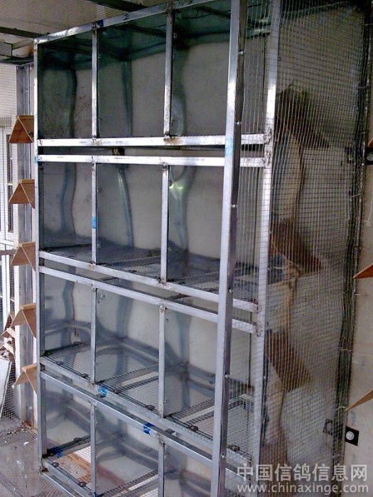 鸽舍--中国养植信息网相册视频兔母信鸽图片