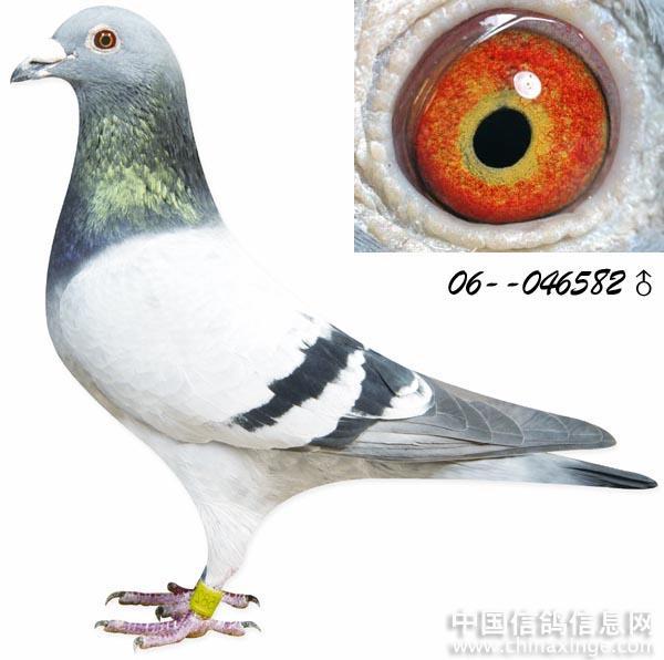 彩泥手工制作大全动物鸽