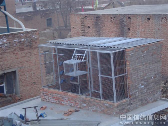 相册的小鸽舍--中国视频信息网石头信鸽炸朋友图片