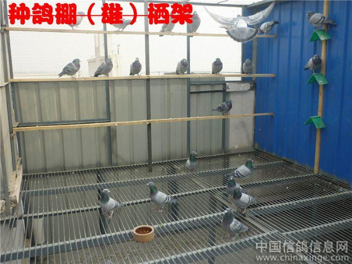 信鸽棚设计图片欣赏