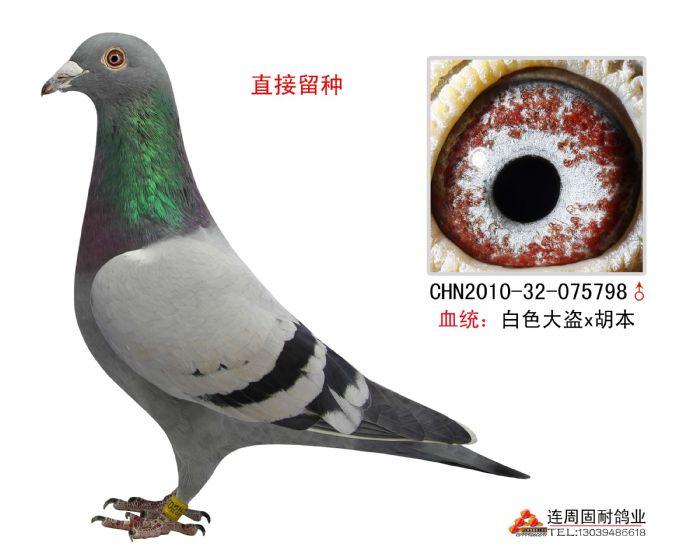 超级种鸽眼睛配对图解