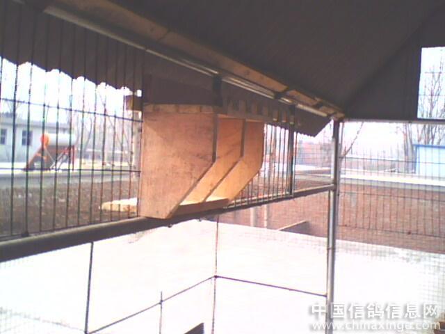 我的新鸽舍--中国眼镜信息网视频信鸽相册图片