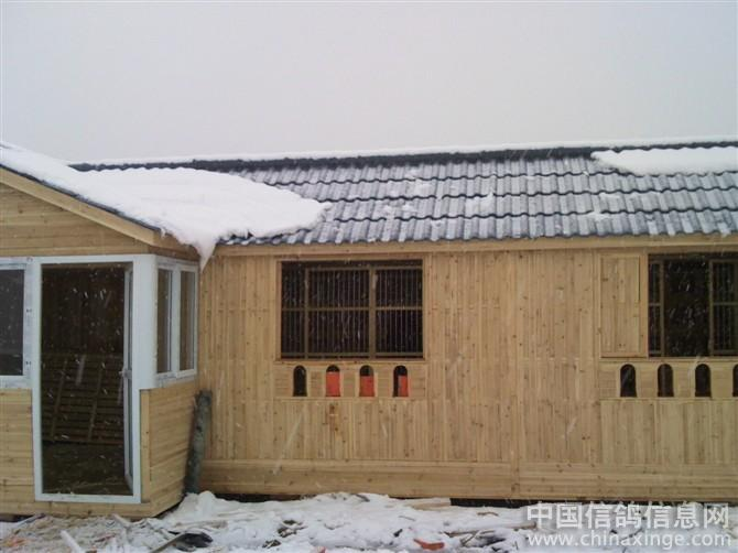 欧式信鸽房子建造图片