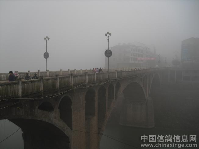 平昌站集鸽放飞花絮 --中国信鸽信息网相册
