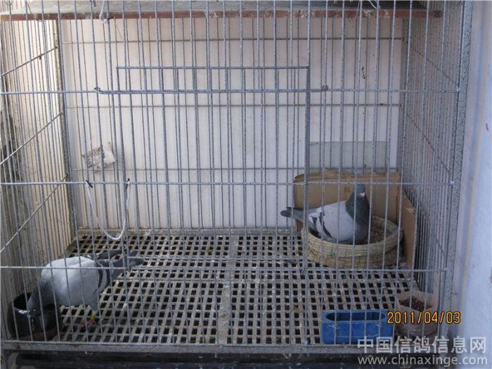 阳台鸽笼子设计图