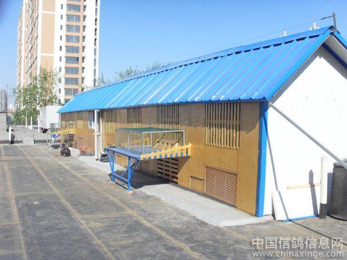 新建赛鸽舍竣工 ---中国信鸽信息网相册