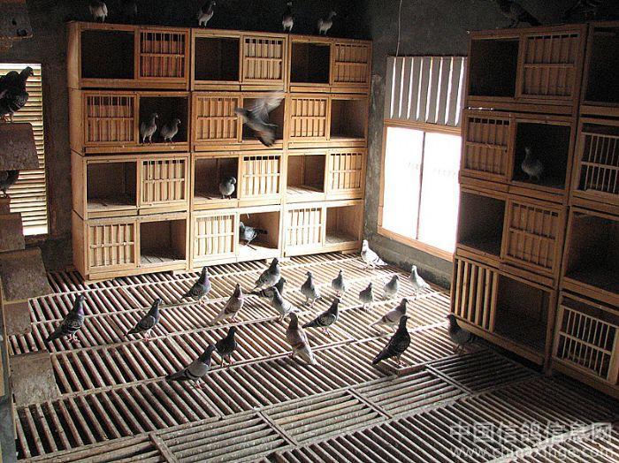 最新鸽棚设计大全图