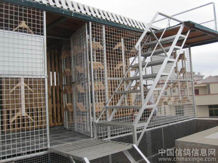 新赛鸽棚--中国信鸽信息网相册图片