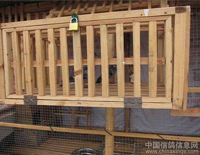 鸽子跳笼设计图尺寸