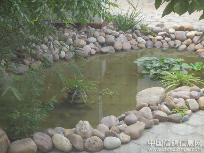 庭院小鱼塘设计图展示