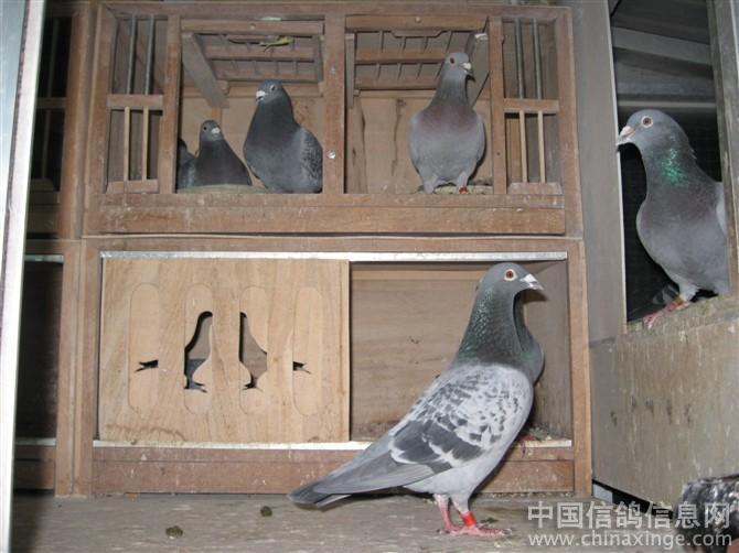 我的阳台鸽舍图片