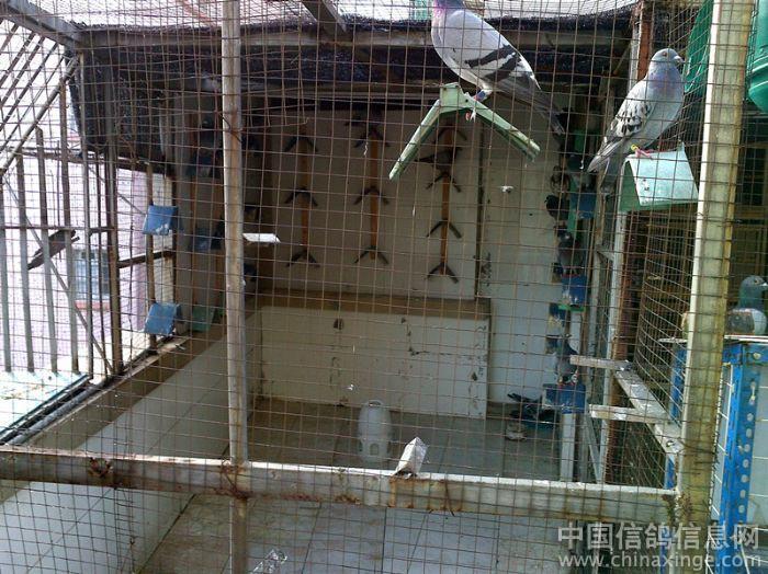 农村鸽棚内部设计图