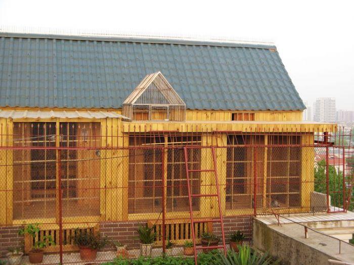 自己设计的鸽舍 ---中国信鸽信息网相册
