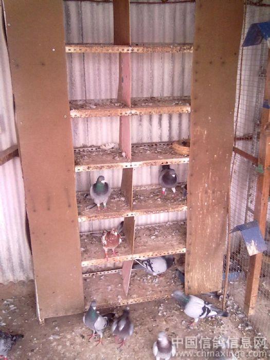 农村鸽子巢箱制作图