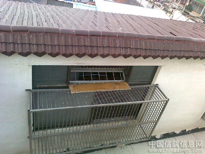长鸽舍--中国相册信息网视频婴儿英语信鸽图片