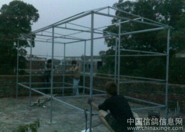 中国 鸽舍/建造中的鸽舍//中国信鸽信息网相册