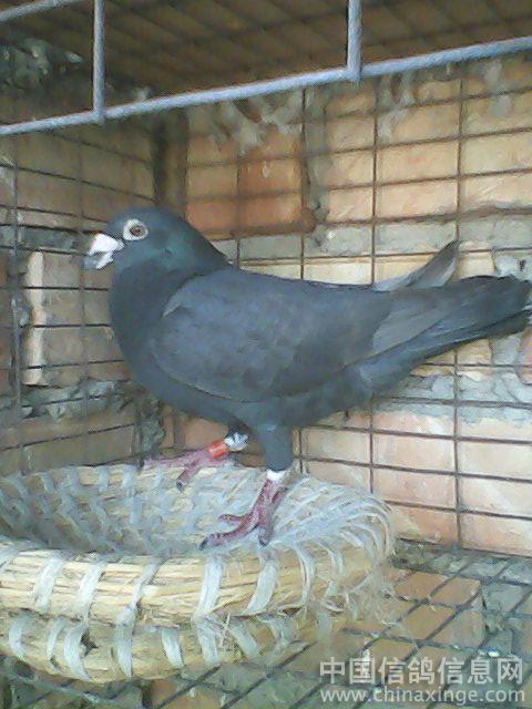 飞利浦 中国 信鸽 信息网相册 高清图片