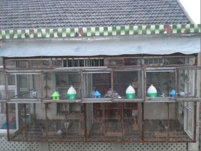 阳台信鸽棚设计图