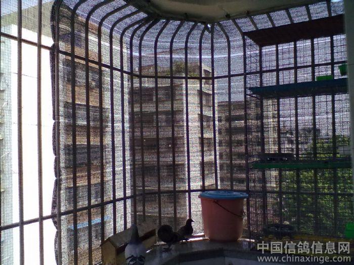 阳台鸽舍进出口设计图