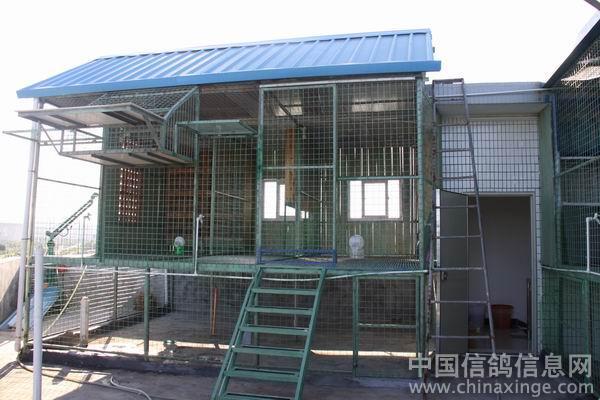 信鸽鸽棚设计图片图片大全 凯瑞赛鸽 中国信鸽信息网相册